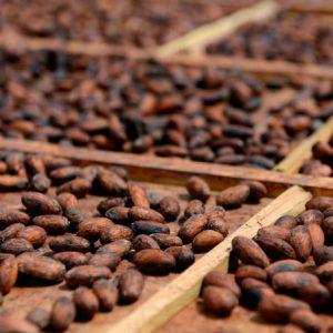 Gedroogde cacaobonen